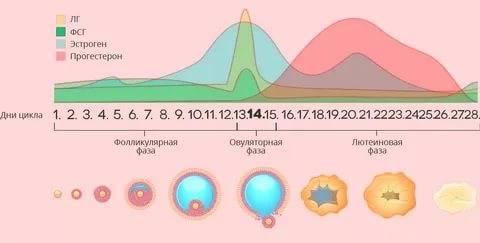 Повышенный и пониженный прогестерон в лютеиновой фазе