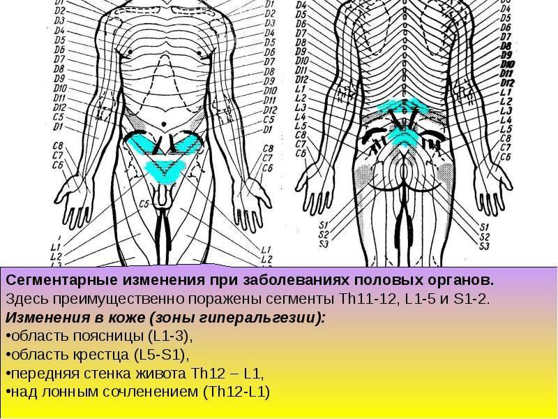Рефлекторный массаж — особенности выполнения, виды методик и приемов в соответствии с сегментарным делением тела человека, показания и противопоказания процедуры. видео-урок по массажным приемам.