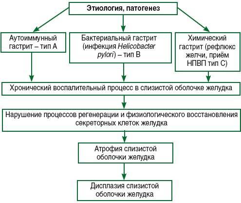 Острый гастрит - классификация, симптомы и лечение
