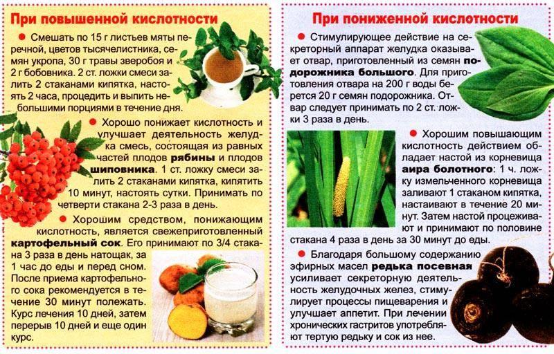 Травы от гастрита с повышенной кислотностью | компетентно о здоровье на ilive