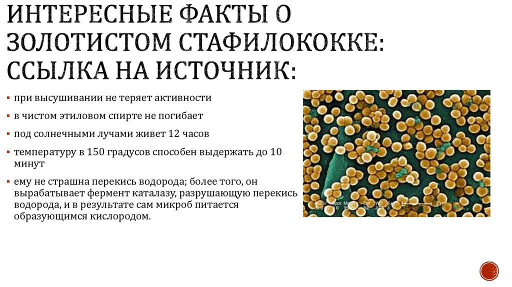 Причины простатита золотистый стафилококк санатории украины с лечением простатита