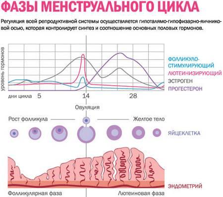 Норма прогестерона на 21 день цикла и в фолликулярной фазе
